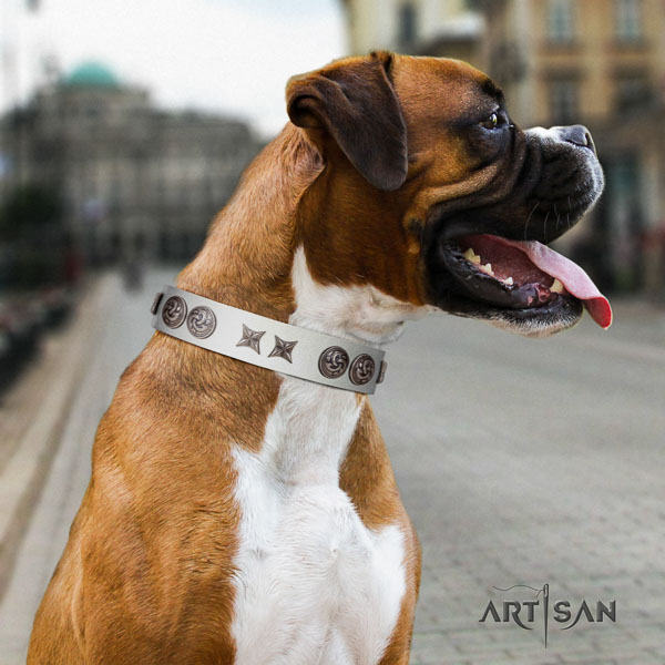 Boxer exceptional full grain natural leather dog collar with adornments
