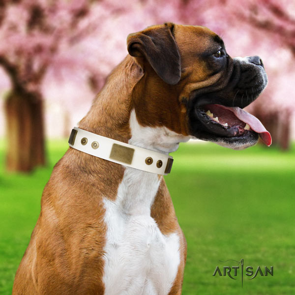 Boxer natural genuine leather collar with rust-proof studs