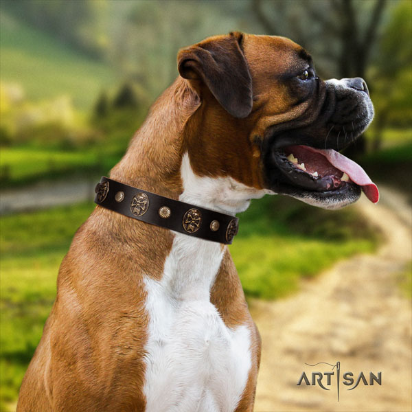 Boxer full grain leather collar with corrosion proof D-ring for daily walking