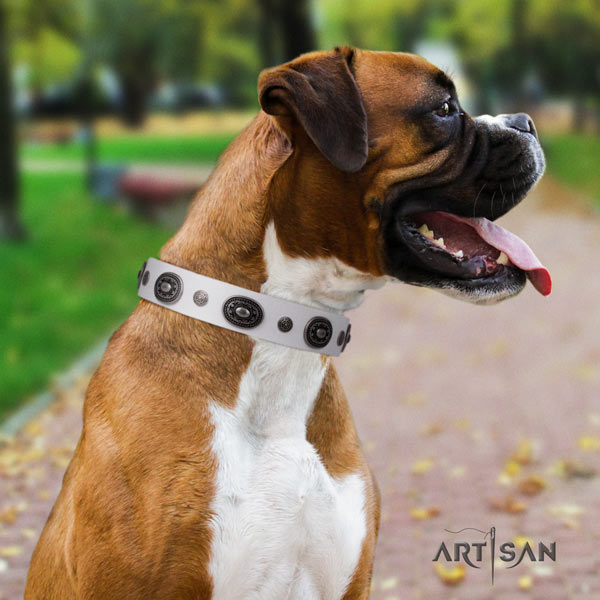 Boxer full grain leather collar with rust resistant buckle