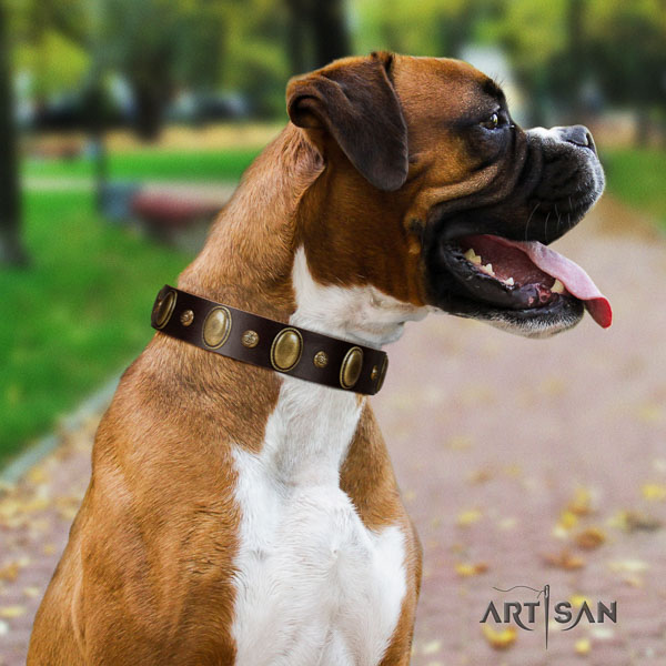 Boxer leather collar with reliable hardware for fancy walking