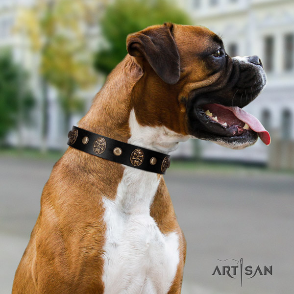 Boxer full grain natural leather collar with corrosion proof hardware for fancy walking