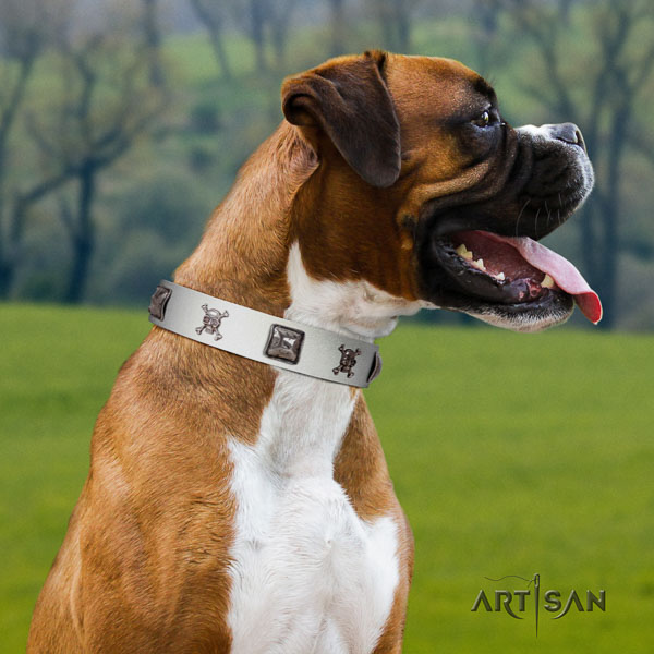 Boxer genuine leather dog collar for everyday walking