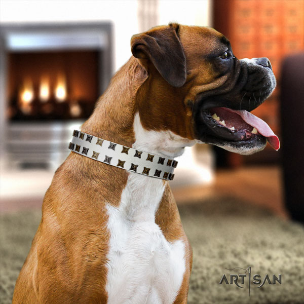 Boxer full grain natural leather collar with strong hardware for basic training