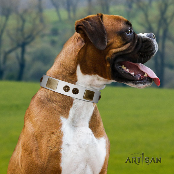 Boxer leather collar with strong hardware for everyday use
