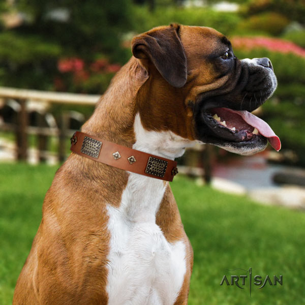 Boxer genuine leather collar with rust-proof embellishments