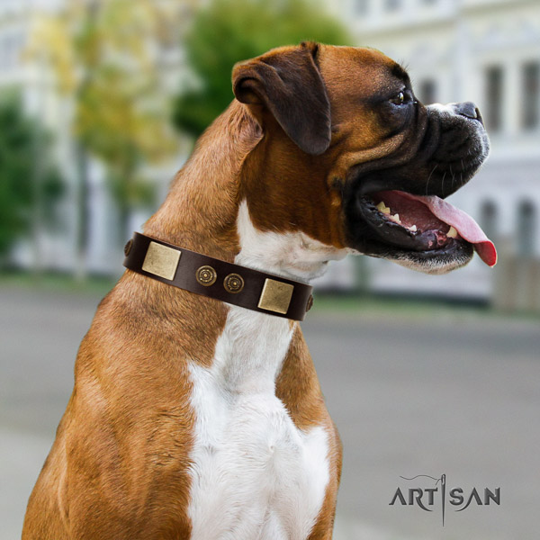 Boxer full grain genuine leather collar with corrosion proof hardware for daily use