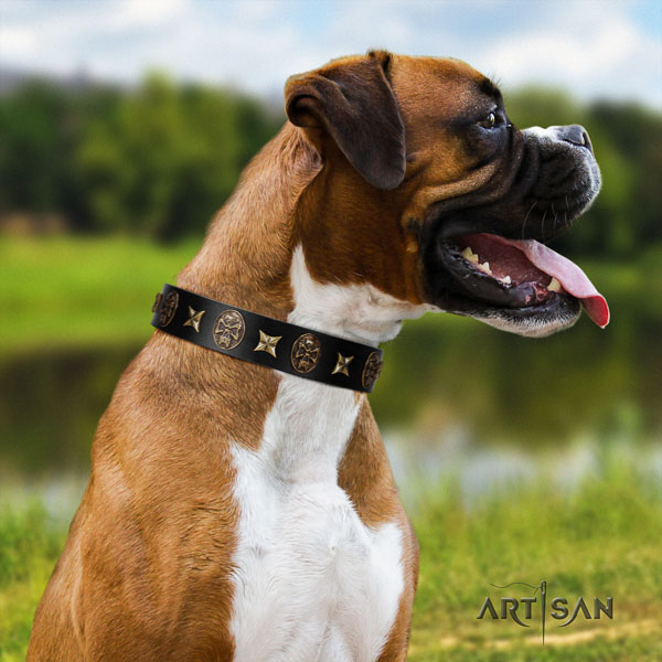 Boxer full grain leather collar with strong traditional buckle for walking
