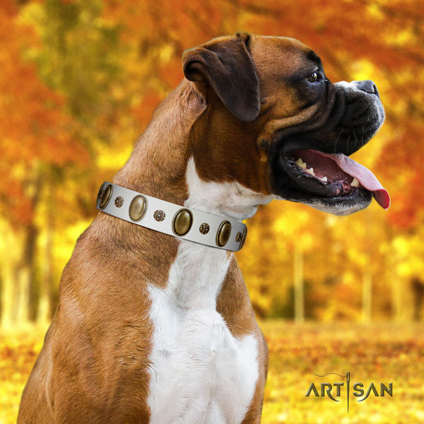 Boxer full grain genuine leather collar with corrosion proof D-ring for everyday use