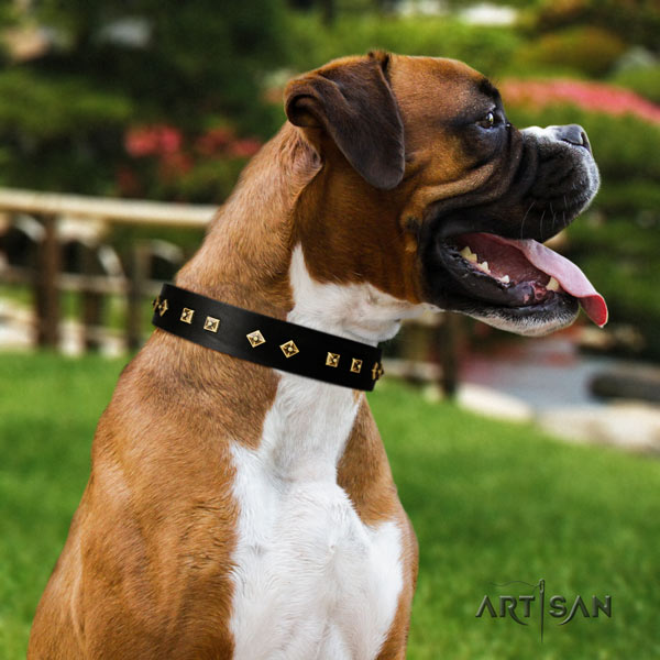 Boxer genuine leather collar with strong fittings