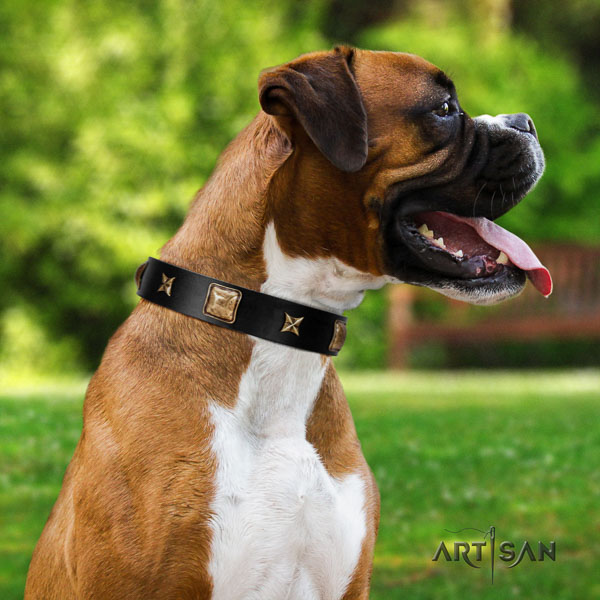 Boxer full grain natural leather collar with corrosion resistant fittings for fancy walking