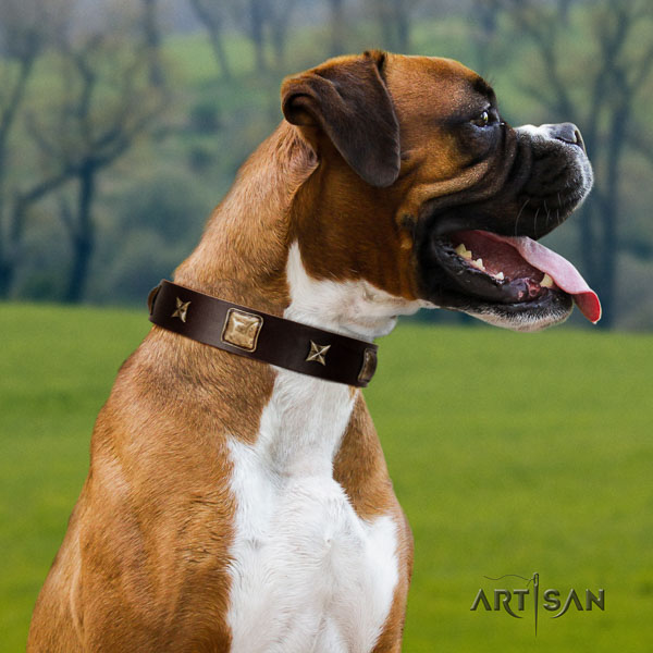 Boxer full grain genuine leather collar with reliable fittings for handy use