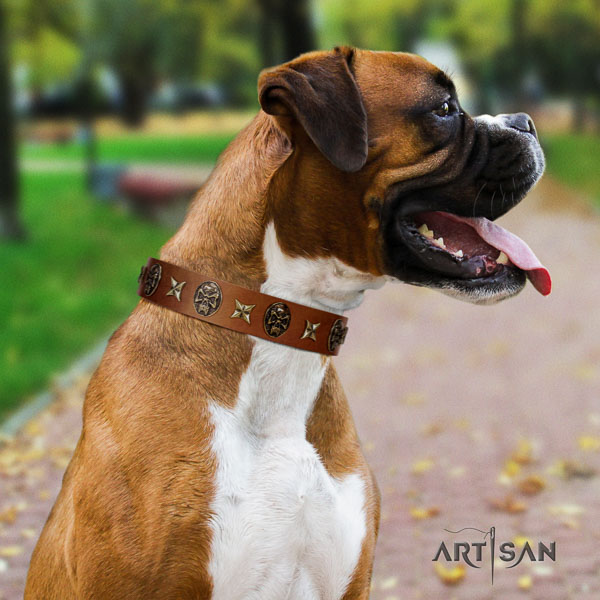 Boxer full grain natural leather collar with strong fittings for everyday walking