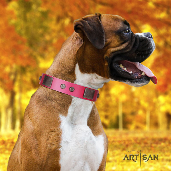 Boxer studded leather dog collar with embellishments