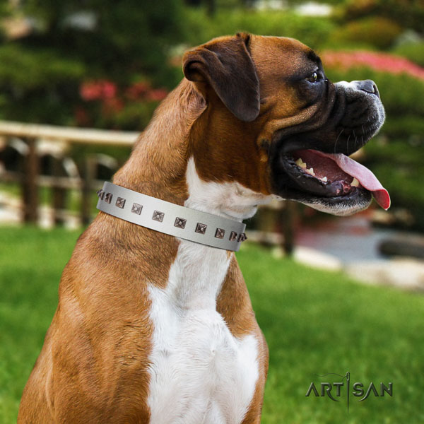Boxer extraordinary full grain natural leather dog collar with studs