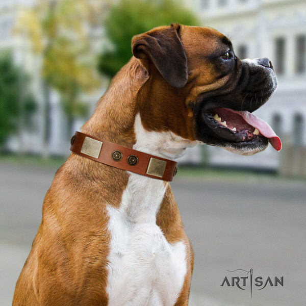 Boxer full grain leather collar with rust resistant D-ring for everyday walking