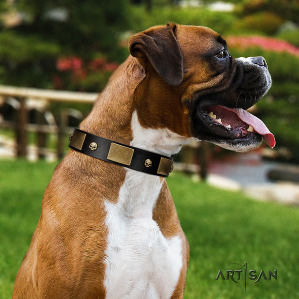 Boxer genuine leather collar with reliable D-ring for easy wearing