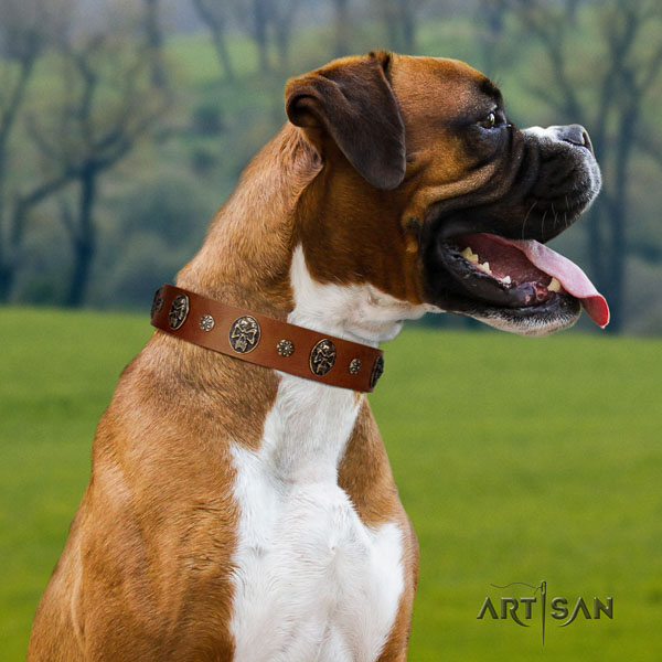 Boxer full grain natural leather collar with reliable D-ring for walking