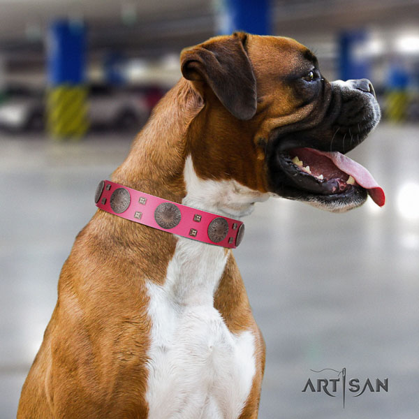 Boxer easy wearing full grain leather dog collar with studs
