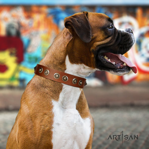 Boxer full grain leather collar with rust resistant fittings for daily walking