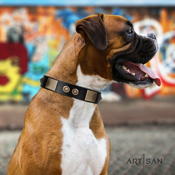 Boxer leather collar with rust-proof hardware for fancy walking