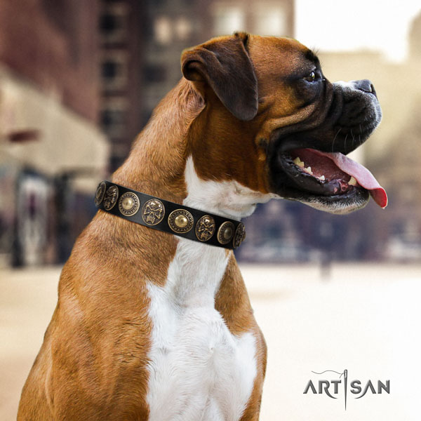 Boxer full grain natural leather collar with rust resistant fittings for everyday walking