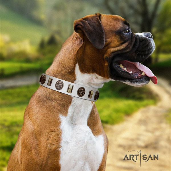 Boxer genuine leather collar with durable fittings for fancy walking