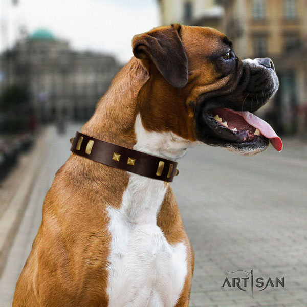 Boxer full grain genuine leather collar with durable hardware for everyday walking