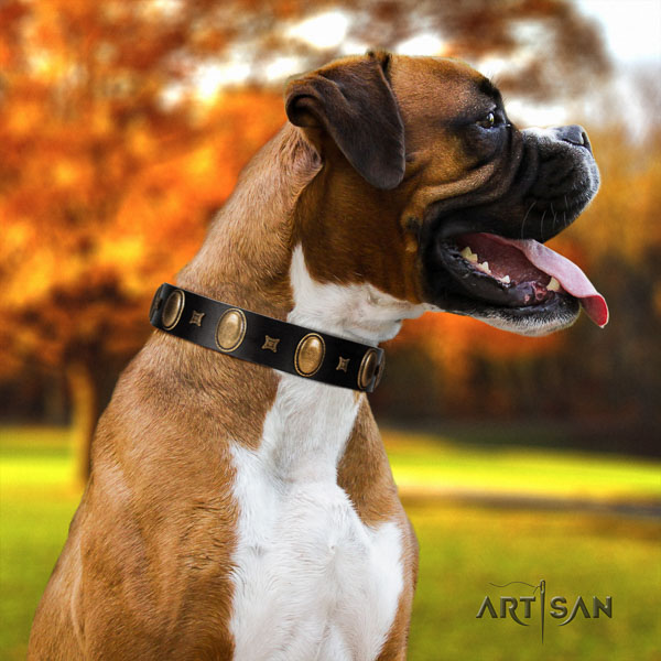 Boxer full grain genuine leather dog collar for everyday walking