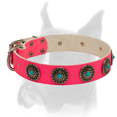 Bright Boxer collar for everyday use