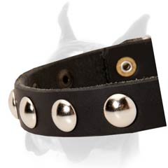 Adjustable leather Boxer collar