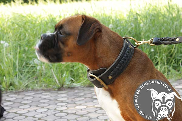 Boxer leather collar of braided design with brass plated hardware for stylish walks