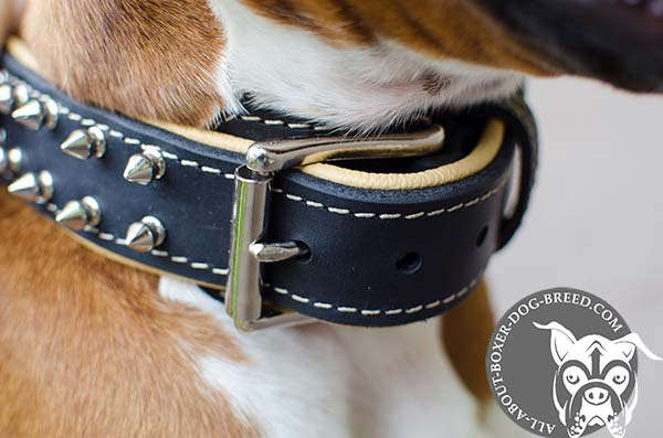 Boxer leather collar adjustable  with riveted hardware for walking