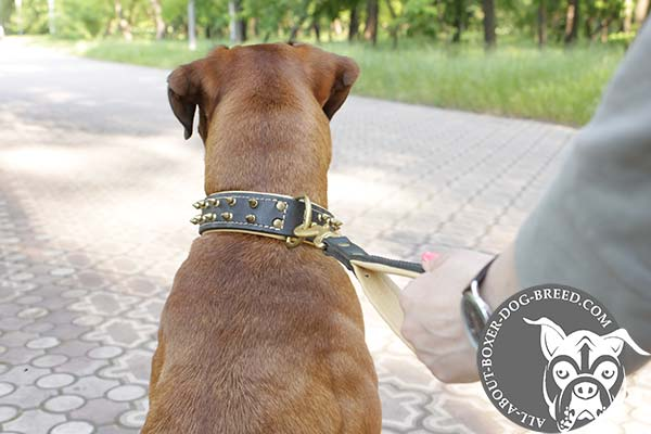 Boxer leather collar with duly riveted brass plated hardware for basic training