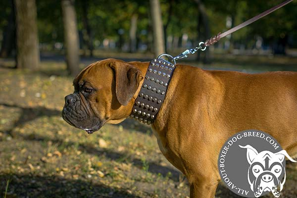 Boxer leather collar with duly riveted hardware for quality control