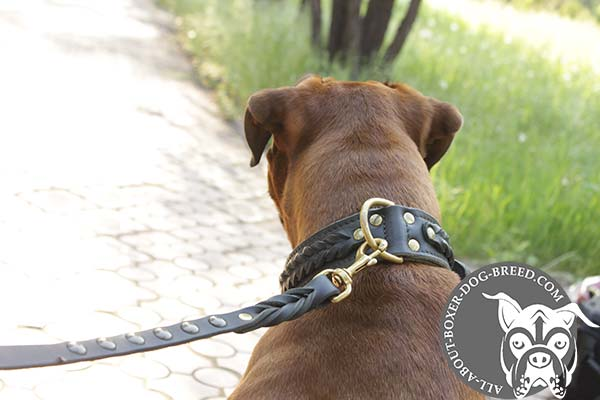 Boxer brown leather collar 2 ply with riveted hardware for perfect control