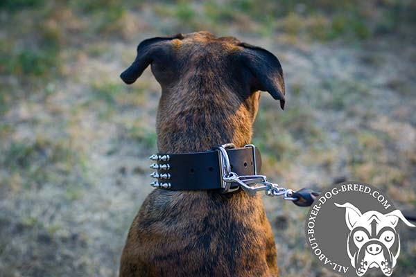 Boxer brown leather collar wide with riveted fittings   for any activity