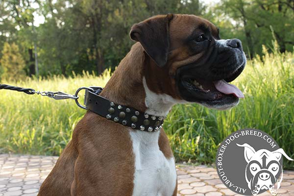 Boxer black leather collar wide decorated with half-balls for any activity
