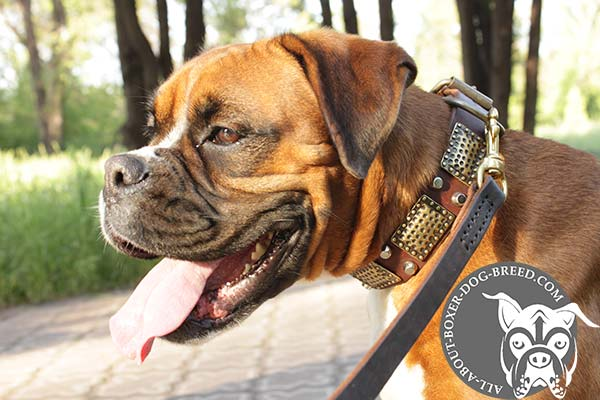 Boxer leather collar adjustable  with handset adornment for stylish walks
