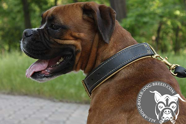 Boxer black leather collar of genuine materials with riveted hardware for daily walks