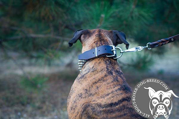 Boxer black leather collar of genuine materials with traditional buckle for safe walking