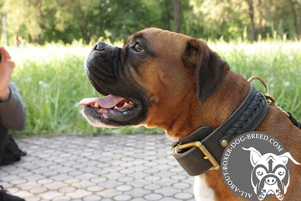 Boxer leather collar with rust-proof hardware for daily walks