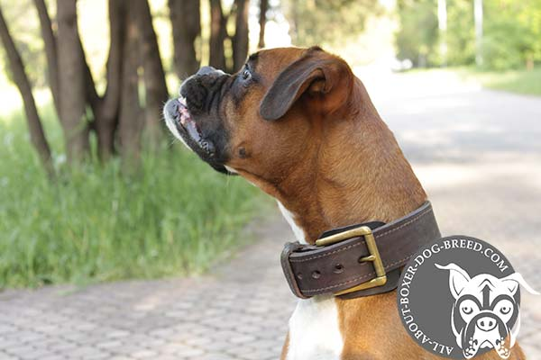 Boxer leather collar 2 ply with traditional buckle for daily activity