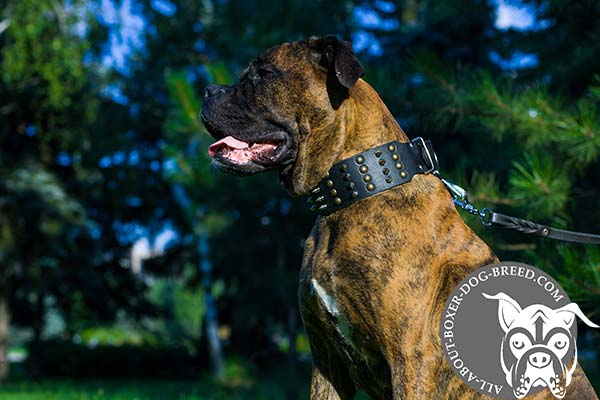 Boxer black leather collar with non-corrosive nickel plated hardware for improved control