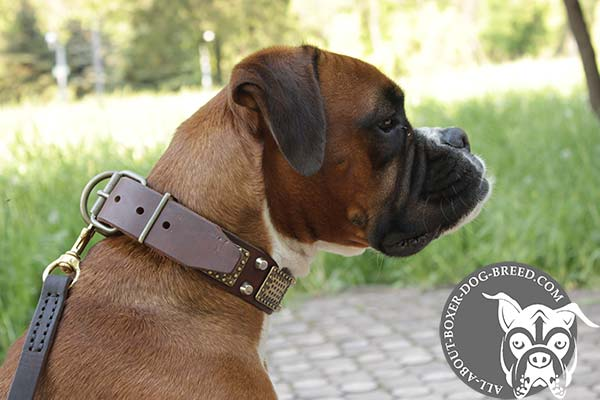 Boxer brown leather collar snugly fitted with brass plated hardware for better comfort