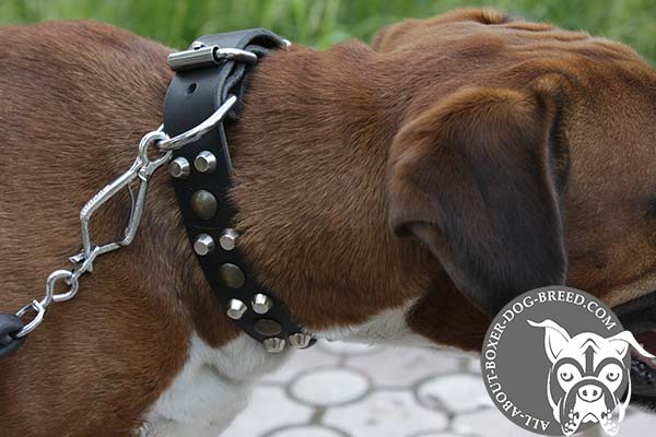 Boxer black leather collar with vintage studs for daily activity