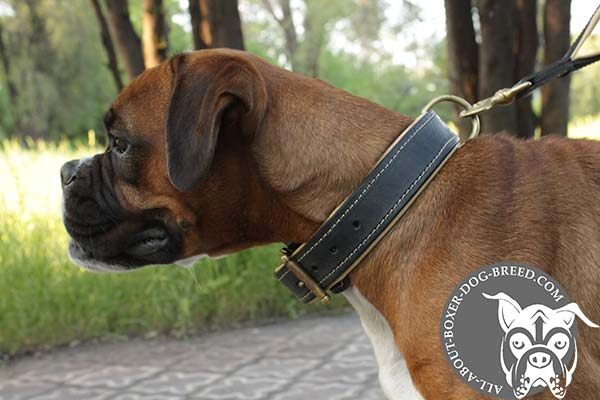 Boxer black leather collar of high quality with d-ring for leash attachment for advanced training