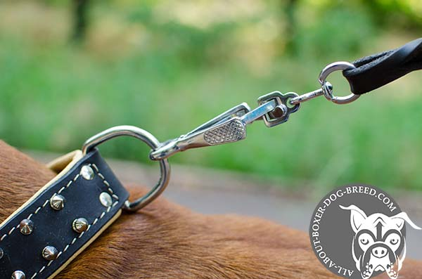 Boxer leather collar of high quality with d-ring for leash attachment for daily walks