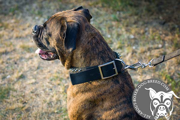 Boxer nylon collar with durable fittings for any activity