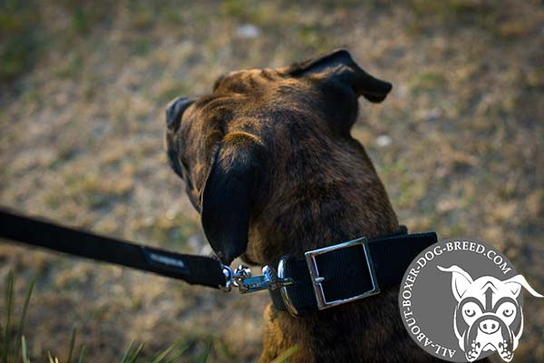 Boxer nylon collar extra wide with traditional buckle for any activity